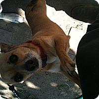Adopt A Pet :: Dylan - West Hills, CA