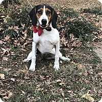 Adopt A Pet :: Harlee - Starkville, MS