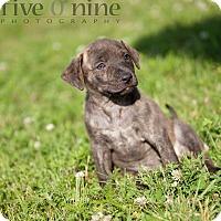 Adopt A Pet :: Boomer - La Crosse, WI