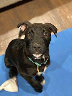 Adopt A Pet :: Kobe  - Clarksville, TN
