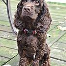 Adopt A Pet :: Hershey