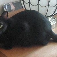 Adopt A Pet :: Sherah - Dale City, VA