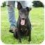 Photo 2 - Labrador Retriever Mix Dog for adoption in Lexington, Missouri - Dixon