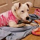Adopt A Pet :: Daenary