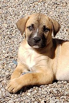 Adopt A Pet :: BRIAN  - Snow Hill, NC