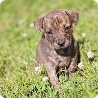 Adopt A Pet :: Joey - La Crosse, WI
