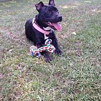 Pit Bull Terrier Mix Dog for adoption in Baton Rouge, Louisiana - Sandra Dee