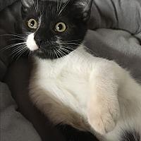 Adopt A Pet :: Pongo - Butner, NC