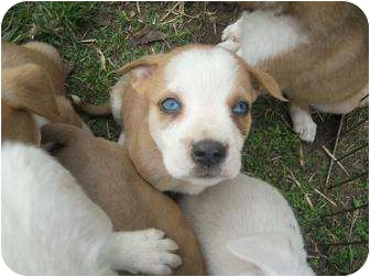 Most Inspiring Puppy Blue Eye Adorable Dog - 83884582  Trends_471873  .jpg