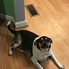Adopt A Pet :: Deoge