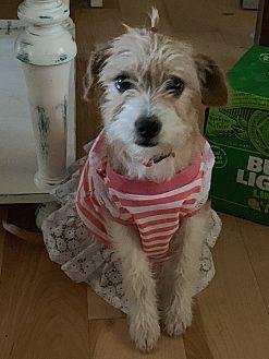Adopt A Pet :: Tullabelle  - Edisto Island, SC