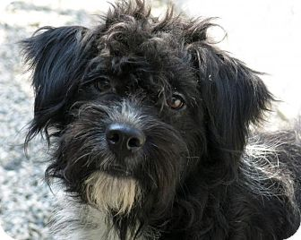 High Point Nc Portuguese Water Dog