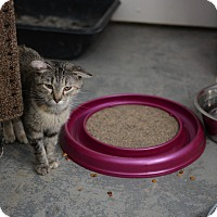 Adopt A Pet :: Misty - Grinnell, IA