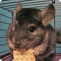 Adopt A Pet :: King - MA - Granby, CT