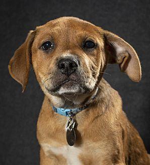 Adopt A Pet :: Robert  - Saint Paul, MN