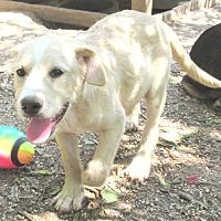 Adopt A Pet :: Mason - Godley, TX