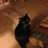 Adopt A Pet :: Porscha (COURTESY POST) - Baltimore, MD