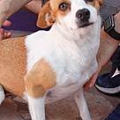 Adopt A Pet :: Sierra