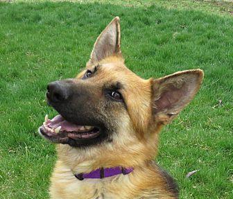 Adopt A Pet :: JERRY **video!**  - Nampa, ID