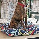 Adopt A Pet :: Toonce