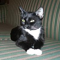 Adopt A Pet :: Trillion (COURTESY POST) - Baltimore, MD