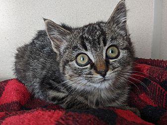 Adopt A Pet :: Ginny  - Laramie, WY