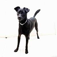 Adopt A Pet :: TEMPLETON - Hampton Bays, NY