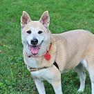 Adopt A Pet :: SWEET LADY