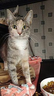 Adopt A Pet :: Purrito  - Fischer, TX