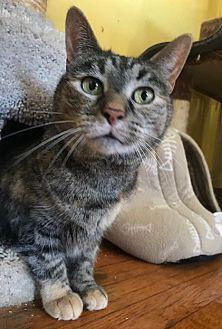 Adopt A Pet :: Bunny  - Devon, PA