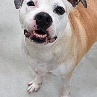 Adopt A Pet :: Winnie - Prince George, VA