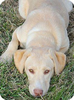 Dynasty as a 5 week old puppy