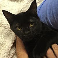 Adopt A Pet :: Dallas - Butner, NC