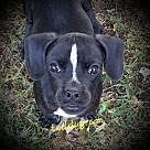 Adopt A Pet :: TeddyGram B