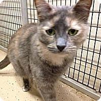 Adopt A Pet :: Sandy - Kerrville, TX