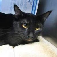Adopt A Pet :: Sally - Menands, NY
