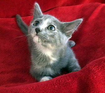 Adopt A Pet :: Caroline  - Concord, NC