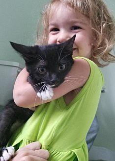 Adopt A Pet :: Kappie  - Devon, PA