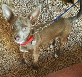 Metro Center Mall Dog Adoption