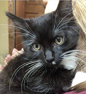 Adopt A Pet :: Gene  - Northwood, NH