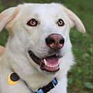Adopt A Pet :: Dawson - NO LONGER ACCEPTING APPLICATIONS!!