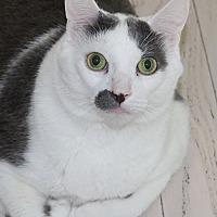 Adopt A Pet :: Ralph - Lutherville, MD