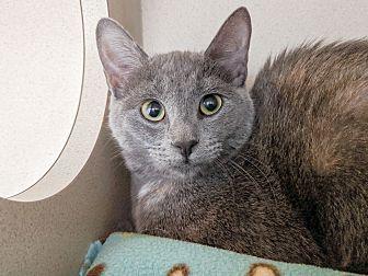 Adopt A Pet :: Fig  - Laramie, WY
