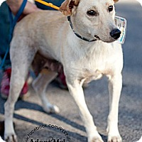Adopt A Pet :: Butterscotch - La Crosse, WI