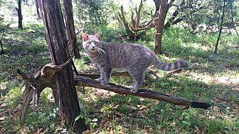 Adopt A Pet :: Misty  - Fischer, TX