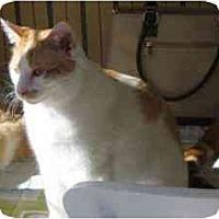 Adopt A Pet :: Wally - Strathmore, AB