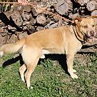 Adopt A Pet :: Mooch