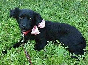Adopt A Pet :: Bethany  - Northwood, NH