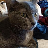 Adopt A Pet :: Fiona Bee - Princeton, MN