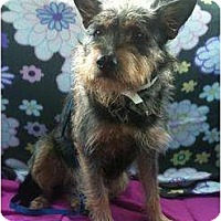 Adopt A Pet :: Elroy - Arlington, TX
